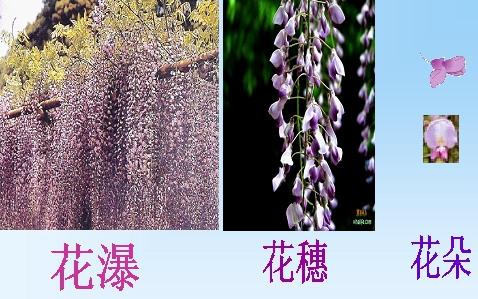 【初一上语文】第16课《紫藤萝瀑布》复习要点及答案